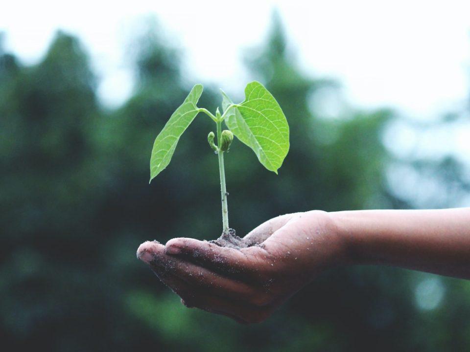 sistema alimentare sostenibile